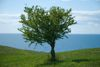 building plot tree preservation order