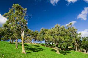 buying land - site visit